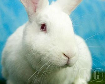 New Zealand for adoption in Pflugerville, Texas - Clarice