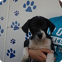 Adopt A Pet :: Elijah - Oviedo, FL