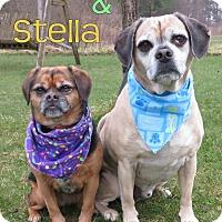 Adopt A Pet :: Walter & Stella - Menomonie, WI