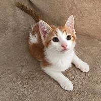 Adopt A Pet :: Blaze - Cerritos, CA