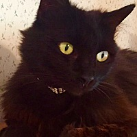 Adopt A Pet :: Sabrina - Tracy, CA
