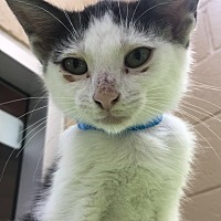 Adopt A Pet :: Otis - Chula Vista, CA