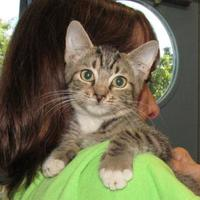 Adopt A Pet :: strayfnd Pinetree CR avail 7/27 - Inverness, FL