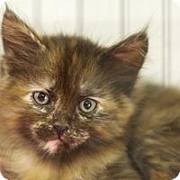 Adopt A Pet :: Marie - Great Falls, MT