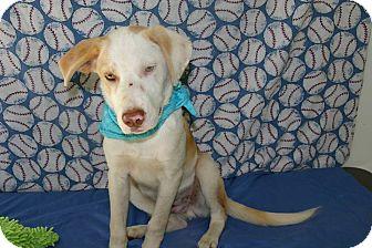 Husky Mix Dog for adoption in Groton, Massachusetts - Jasper