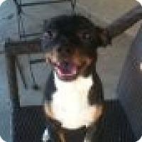 Adopt A Pet :: Choncho-Only $65 adoption fee! - Litchfield Park, AZ
