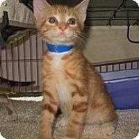 Adopt A Pet :: Atlas - Shelton, WA