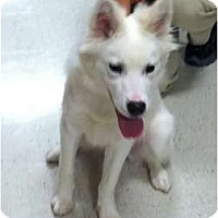 Adopt A Pet :: Fonzi - Douglasville, GA