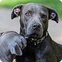 Adopt A Pet :: NIkki - Roaring Spring, PA