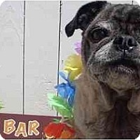 Adopt A Pet :: Mr. Puppy-VA - Mays Landing, NJ