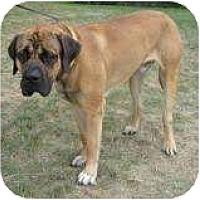 Adopt A Pet :: Roland - Palmyra, WI