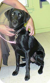Australian Shepherd/Labrador Retriever Mix Dog for adoption in Eastpoint, Florida - Sparky