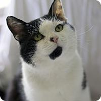 Adopt A Pet :: Patrick F. - Chicago, IL