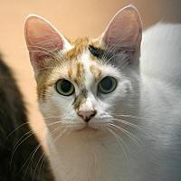 Adopt A Pet :: Flowerbell - Aberdeen, WA