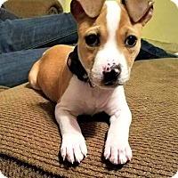 Adopt A Pet :: Patty - Chesapeake, VA
