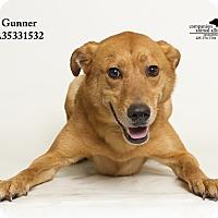 Adopt A Pet :: Gunner - Baton Rouge, LA