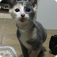 Adopt A Pet :: Zoe - Brooklyn, NY