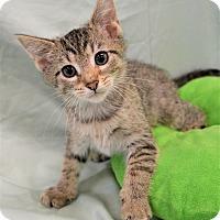 Adopt A Pet :: Felix - Michigan City, IN