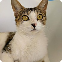 Adopt A Pet :: Gypsy - Austintown, OH