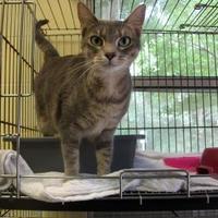 Adopt A Pet :: Bossie - Dothan, AL