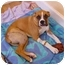 Photo 2 - Boxer Dog for adoption in Columbia, South Carolina - Tyson