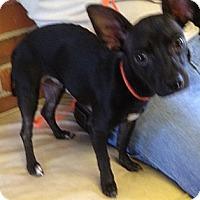 Adopt A Pet :: Mike - Richmond, VA