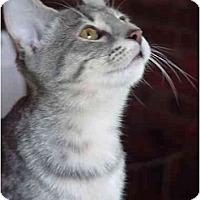 Adopt A Pet :: Mothra - Chesapeake, VA