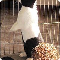 Adopt A Pet :: Twyla - Rockville, MD