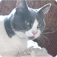 Adopt A Pet :: Gracie - Morris, PA
