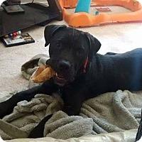 Adopt A Pet :: RYKER - Kingston, WA