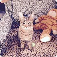 Adopt A Pet :: Grace Slick - Alexandria, VA