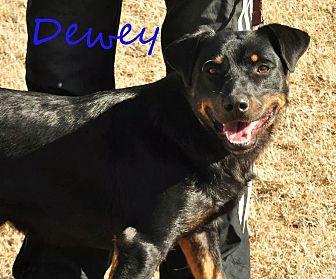 Rottweiler Mix Dog for adoption in Davis, Oklahoma - Dewey OKs31