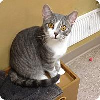 Adopt A Pet :: Monkey - Byron Center, MI