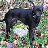 Adopt A Pet :: Rita - Surrey, BC