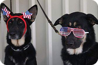 German Shepherd Dog Mix Dog for adoption in Houston, Texas - Dakota & Blue - Adoption Pend.