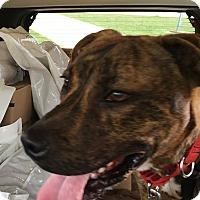 Adopt A Pet :: Jimmy - East McKeesport, PA