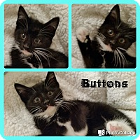 Adopt A Pet :: Buttons - Arlington/Ft Worth, TX
