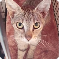Adopt A Pet :: Sandy - New Smyrna Beach, FL