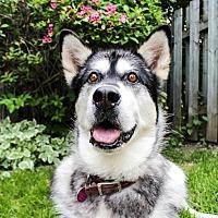 Adopt A Pet :: Sally - Rigaud, QC