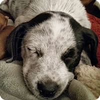 Adopt A Pet :: Bubbles - Wyoming, MI