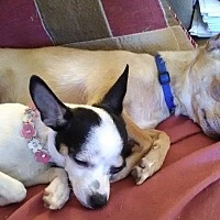 Adopt A Pet :: Carly & Spencer - Phoenix, AZ