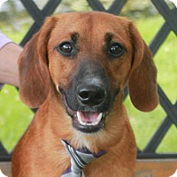 Adopt A Pet :: Griffy - Garfield Heights, OH