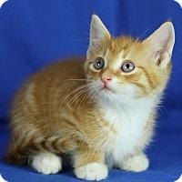 Adopt A Pet :: Mario - Winston-Salem, NC