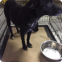Shepherd (Unknown Type) Dog for adoption in Whiteville, North Carolina - Sarah