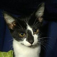 Adopt A Pet :: Lilli - Spring, TX