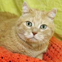 Adopt A Pet :: Simba - Bristol, IN