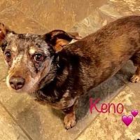 Adopt A Pet :: Keno - DRUT - Los Angeles, CA