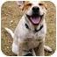 Photo 2 - Australian Cattle Dog/Hound (Unknown Type) Mix Dog for adoption in Phoenix, Arizona - Sid **ADOPTION PENDING**