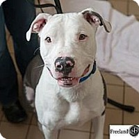 Adopt A Pet :: Rocket - Jackson, MI