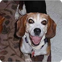 Adopt A Pet :: Daisy - Indianapolis, IN